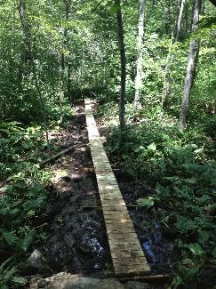 Massapoag Trail boardwalk