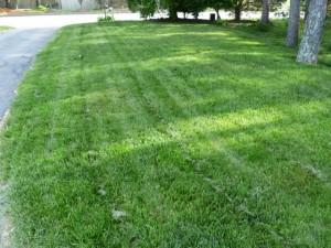 Lawn 6-18-15